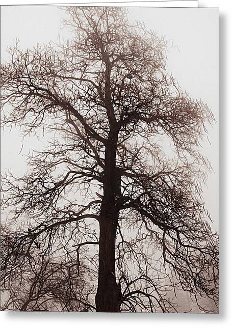 Sepia White Nature Landscapes Greeting Cards - Winter tree in fog Greeting Card by Elena Elisseeva