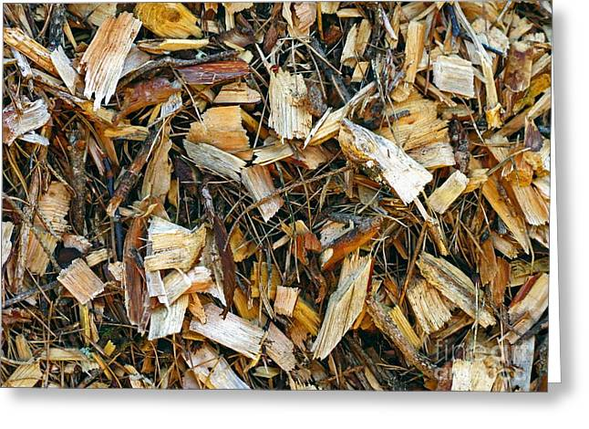 Bioenergy Greeting Cards - Wood For Biomass Power Plant Greeting Card by Bjorn Svensson