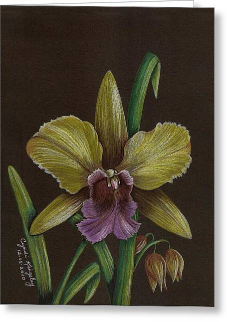 Cyndi Kingsley Greeting Cards - Yellow and Purple Orchid Greeting Card by Cyndi Kingsley