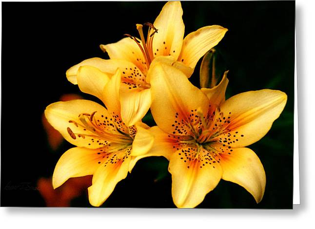 Day Lilly Digital Greeting Cards - 3 Yellow Day Lillies Greeting Card by Robert J Sadler