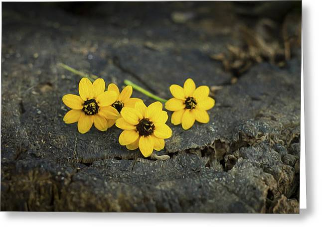 Gardening Digital Art Greeting Cards - 3 Yellow Flowers Greeting Card by Aged Pixel