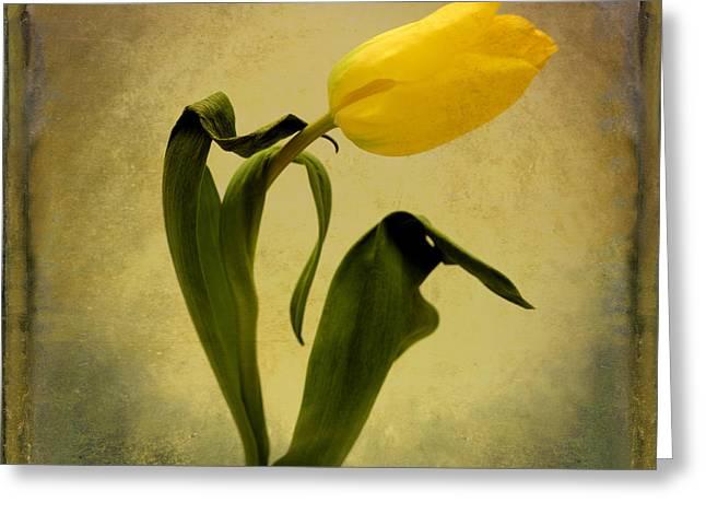 Auto Greeting Cards - Yellow tulip Greeting Card by Bernard Jaubert