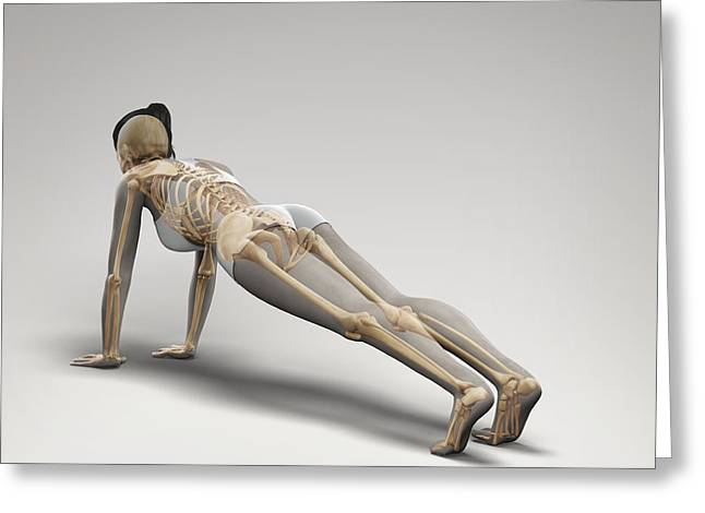 Physical Body Greeting Cards - Yoga Plank Pose Greeting Card by Science Picture Co