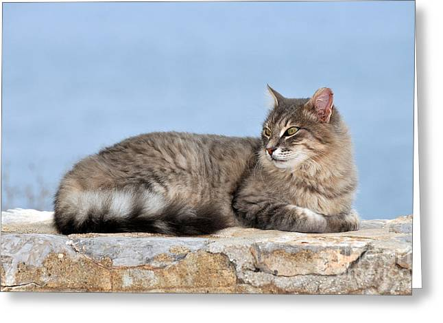 Journey Greeting Cards - Cat in Hydra island Greeting Card by George Atsametakis