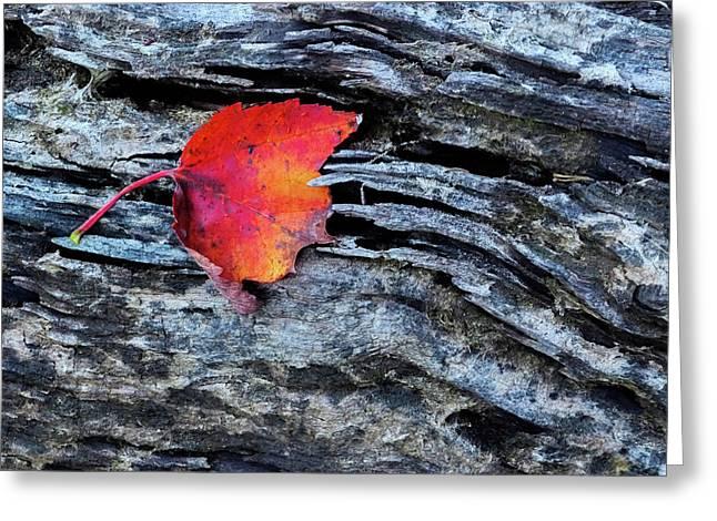 Usa, New York, Adirondack Mountains Greeting Card by Jaynes Gallery