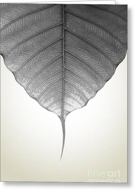 Shade Greeting Cards - Pho Or Bodhi Greeting Card by Atiketta Sangasaeng
