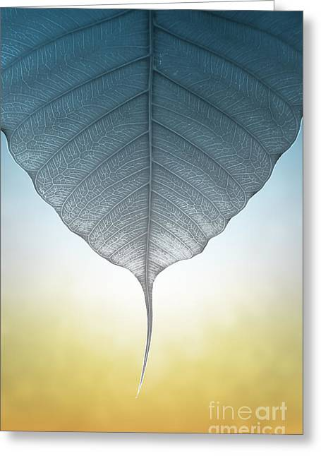 Translucent Greeting Cards - Pho Or Bodhi Greeting Card by Atiketta Sangasaeng
