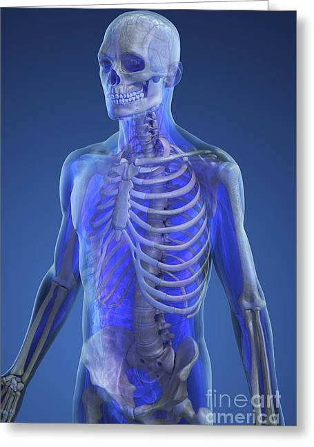 Rib Cage Greeting Cards - The Skeleton Greeting Card by Science Picture Co
