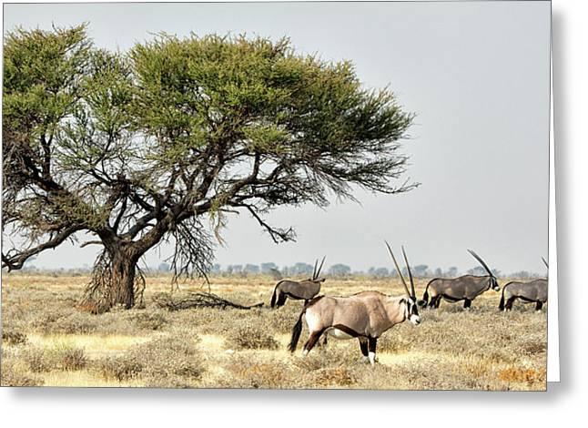 Africa, Namibia, Etosha National Park Greeting Card by Jaynes Gallery