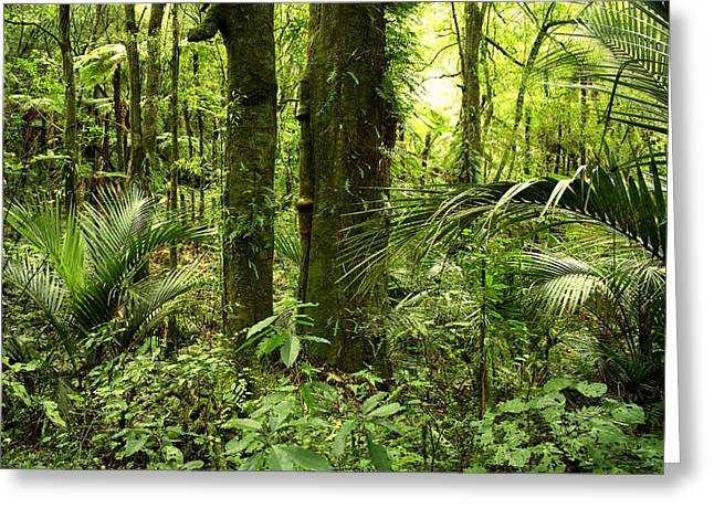 Lush Colors Greeting Cards - Jungle Greeting Card by Les Cunliffe