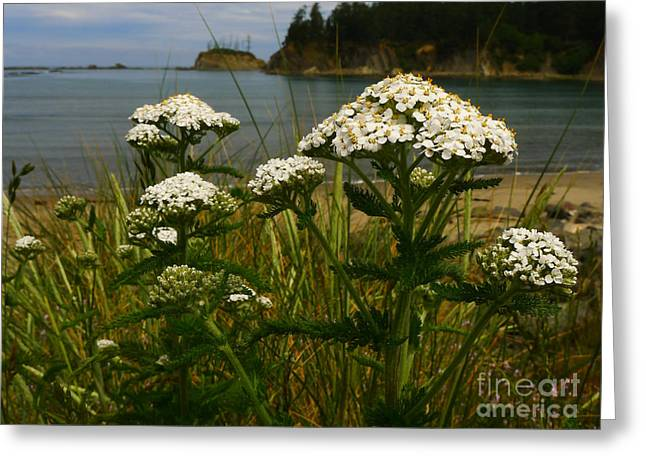 Sunset Bay State Park Greeting Card by Gail Peters