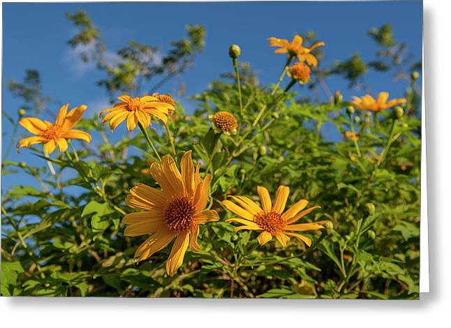 Dominican Republic, Punta Cana, Higuey Greeting Card by Lisa S. Engelbrecht