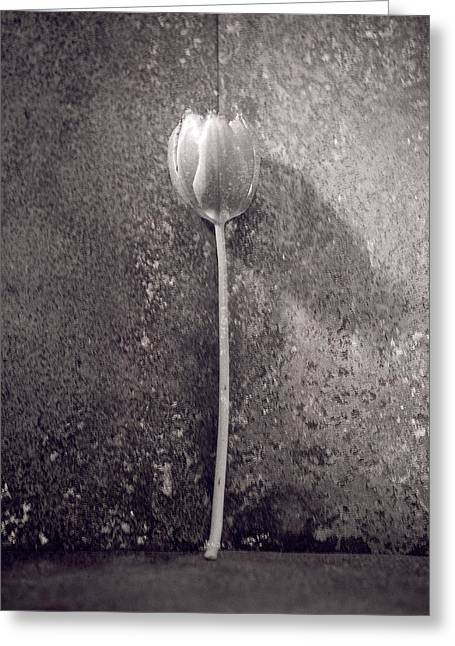 Flower Photos Greeting Cards - Untitled Greeting Card by Didier Gaillard