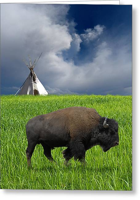 Buffalo Greeting Cards - 3674 Greeting Card by Peter Holme III