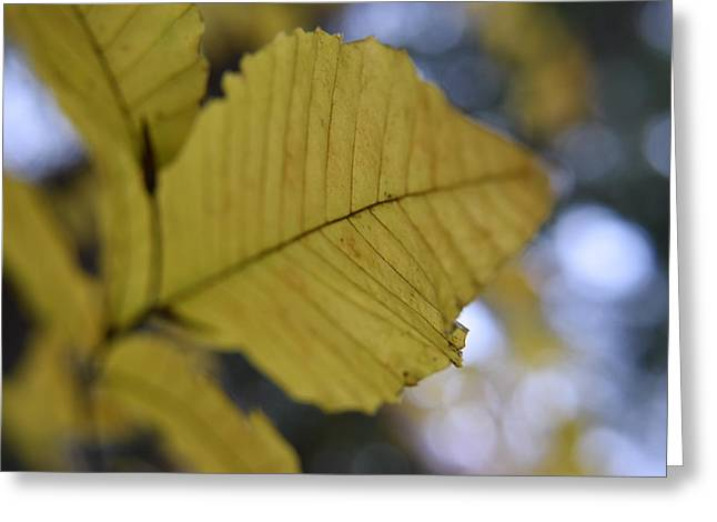 Gatlinburg Tennessee Greeting Cards - Autumn Leaves Greeting Card by Curtis Krusie