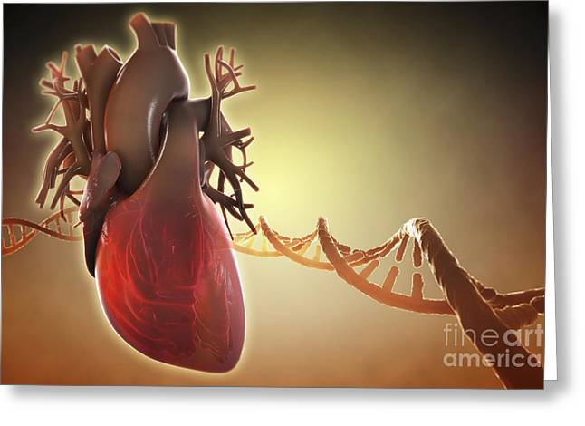 Aorta Greeting Cards - Heart Anatomy Greeting Card by Science Picture Co