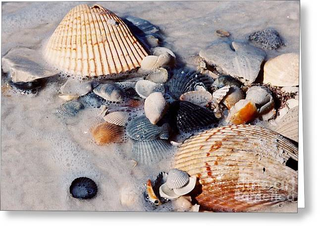 Photos Greeting Cards - #376 19a Seashells in the Sand Film.jpg Greeting Card by Robin Lee Mccarthy Photography