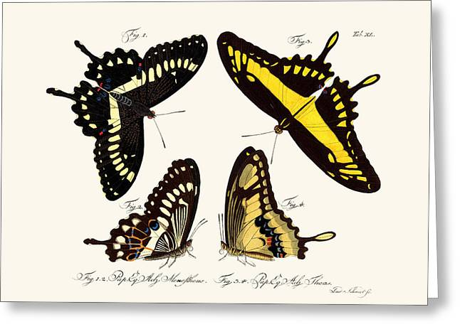 Papilio Thoas Greeting Cards - Butterflies Greeting Card by Splendid Art Prints