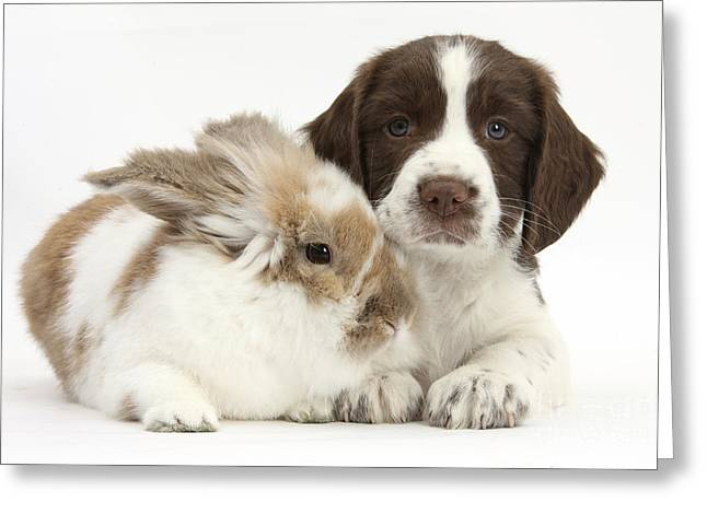 Working Dog Greeting Cards - Puppy And Rabbit Greeting Card by Mark Taylor
