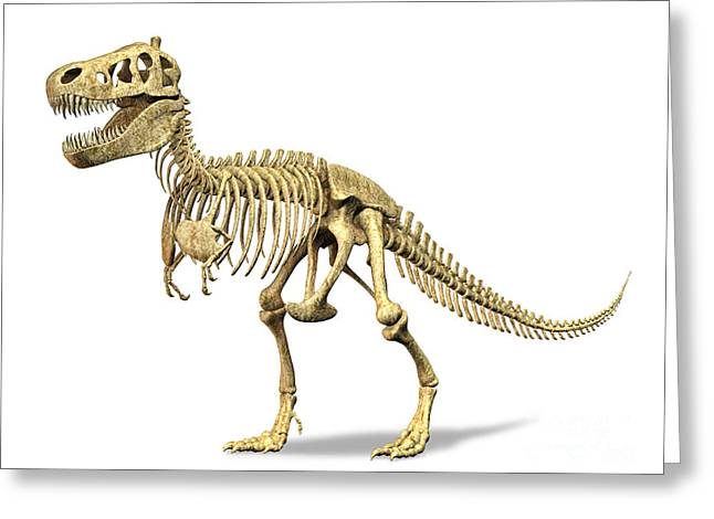 Saurischia Greeting Cards - 3d Rendering Of A Tyrannosaurus Rex Greeting Card by Leonello Calvetti