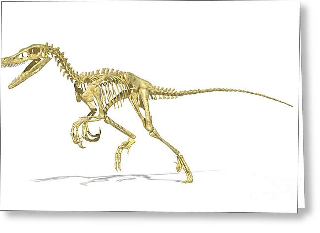 Dromaeosaurid Greeting Cards - 3d Rendering Of A Velociraptor Dinosaur Greeting Card by Leonello Calvetti
