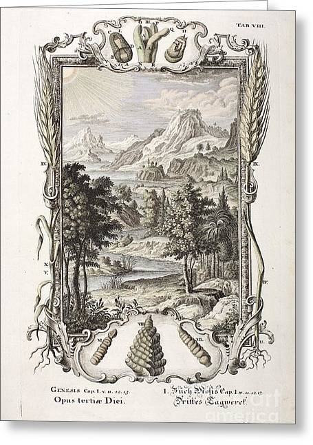 Bible Greeting Cards - 3rd Day Of Creation, Scheuchzer, 1731 Greeting Card by Paul D. Stewart