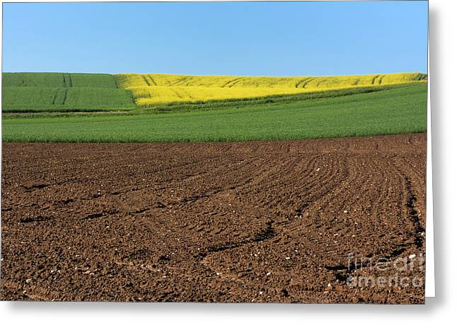 Plowing Field Greeting Cards - Agricultural landscape. Auvergne. France. Greeting Card by Bernard Jaubert