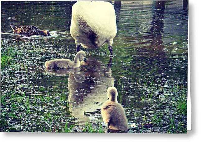 All In The Family Greeting Card by Cyryn Fyrcyd