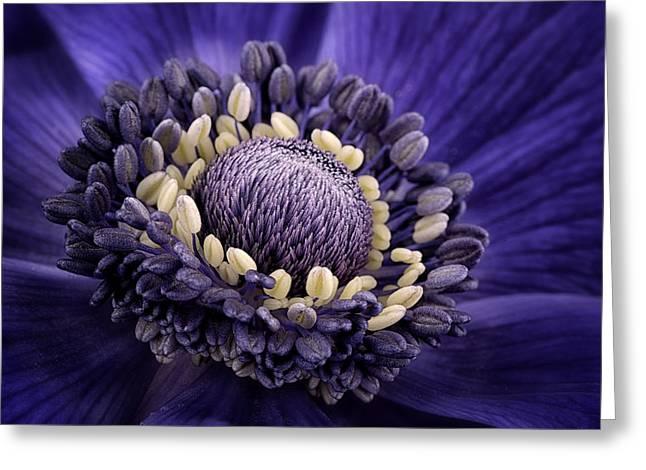 Anemone Greeting Card by Mark Johnson