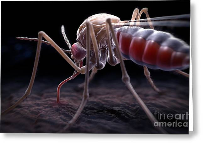 Insect Problem Greeting Cards - Anopheles Mosquito Greeting Card by Science Picture Co