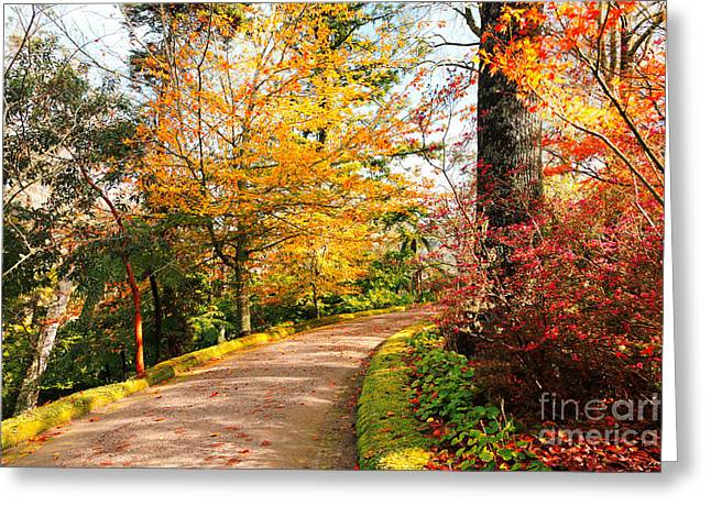 Vale Greeting Cards - Autumn colors Greeting Card by Gaspar Avila