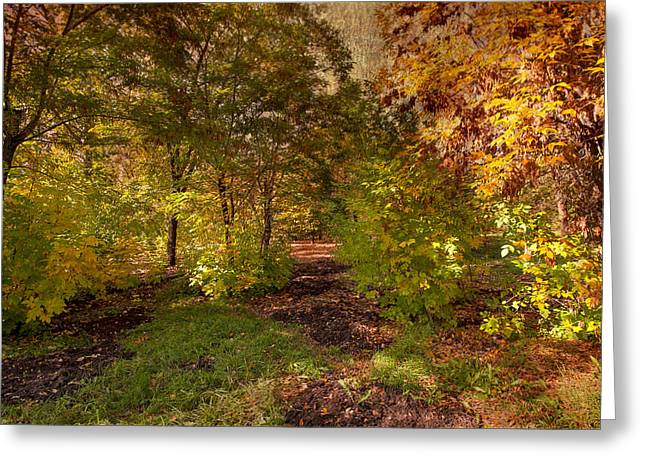 Tree In Golden Light Greeting Cards - Autumn Greeting Card by Svetlana Sewell