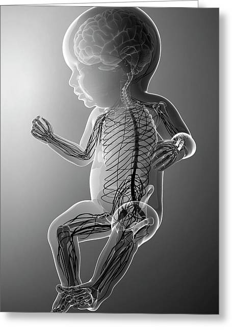 Baby's Nervous System Greeting Card by Pixologicstudio