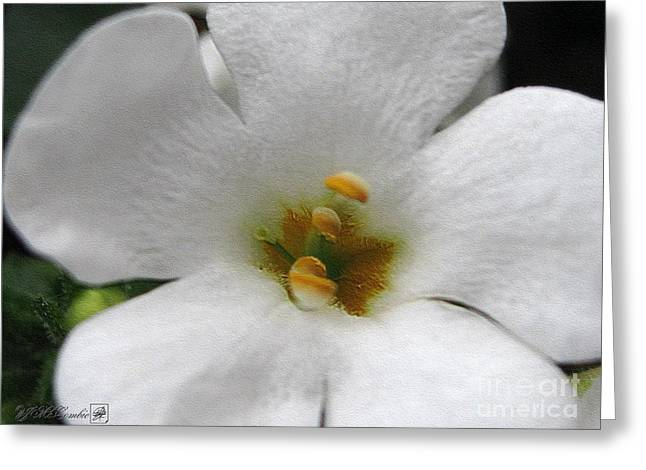 Beautiful Scenery Greeting Cards - Bacopa named Snowtopia Greeting Card by J McCombie