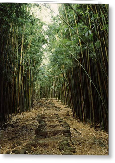 Non Urban Scene Greeting Cards - Bamboo Forest, Oheo Gulch, Seven Sacred Greeting Card by Panoramic Images