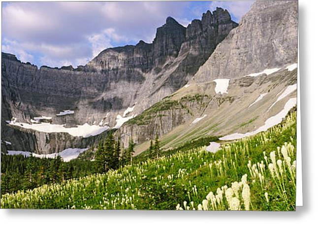 Us Glacier National Park Greeting Cards - Beargrass Xerophyllum Tenax Greeting Card by Panoramic Images