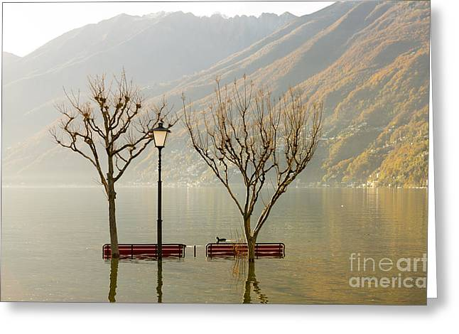 Swiss Culture Greeting Cards - Benches and trees Greeting Card by Mats Silvan