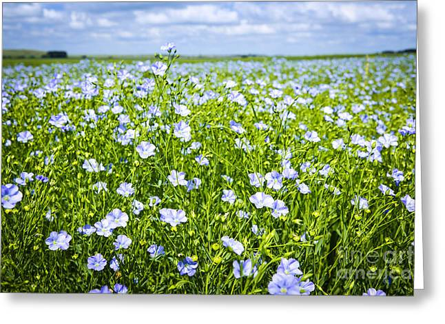 Abundant Greeting Cards - Blooming flax field Greeting Card by Elena Elisseeva
