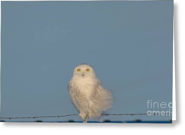 Full-length Portrait Greeting Cards - Bright Eyes Greeting Card by Cheryl Baxter