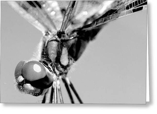 Invertebrates Greeting Cards - Brown Dragonfly Greeting Card by Celso Diniz