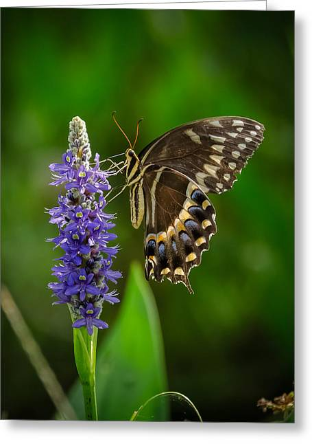 Bird Rookery Swamp Greeting Cards - Butterfly Greeting Card by Bill Martin