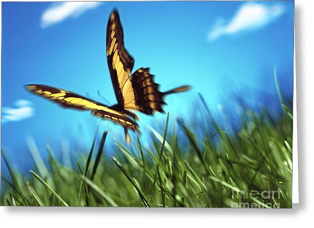 Flying Insect Greeting Cards - Butterfly Greeting Card by Tony Cordoza