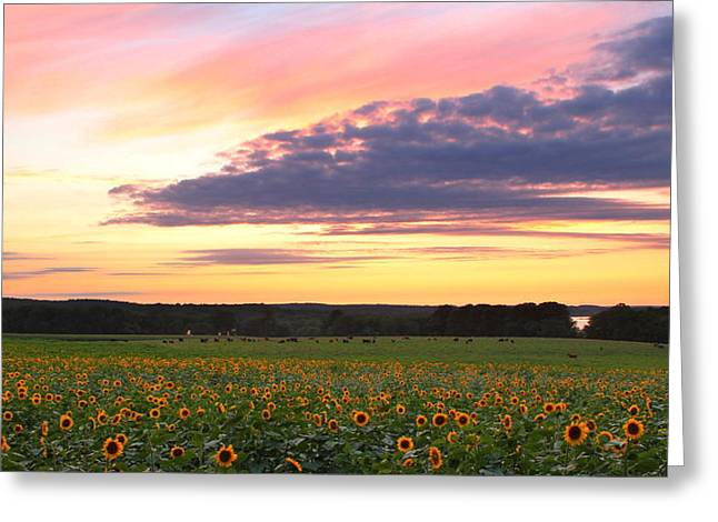 Griswold Connecticut Greeting Cards - Buttonwood Farm Greeting Card by Andrea Galiffi