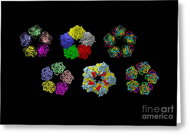 Acute Greeting Cards - C-reactive Protein, Molecular Models Greeting Card by Dr. Tim Evans