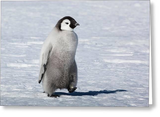 Cape Washington, Antarctica Greeting Card by Janet Muir
