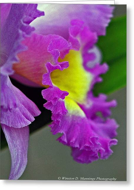 Cattleya Greeting Cards - Cattleya Orchid Greeting Card by Winston D Munnings