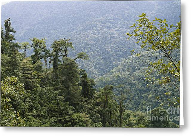 Moist Greeting Cards - Cloud Forest, Costa Rica Greeting Card by Gregory G. Dimijian, M.D.