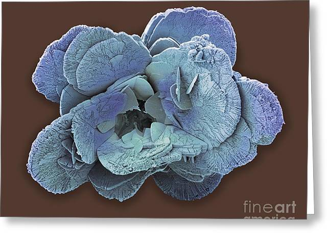 Coccospheres Greeting Cards - Coccoliths, Sem Greeting Card by Steve Gschmeissner