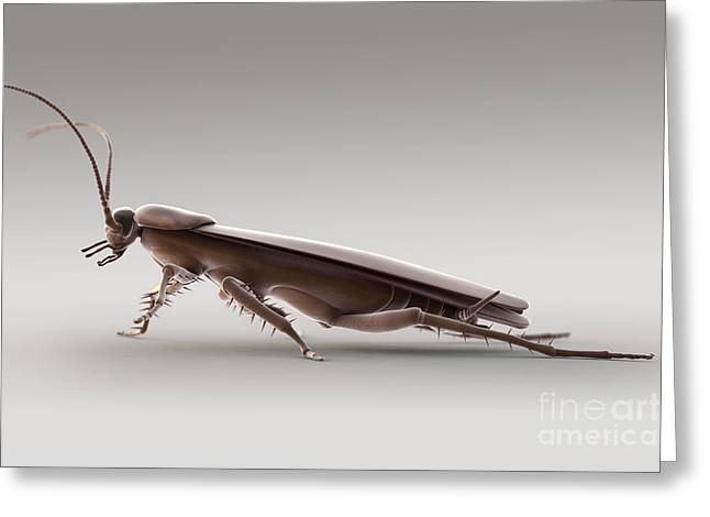 Unhygienic Greeting Cards - Cockroach Greeting Card by Science Picture Co