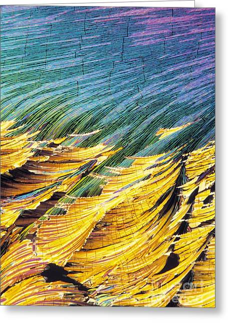 Hydrocortisone Greeting Cards - Cortisol Crystals, Light Micrograph Greeting Card by David Parker